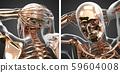 3d rendering illustration of skeleton bone anatomy 59604008