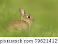 Portrait of a little rabbit in grass 59621412