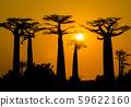 Stunning sunset above Baobab Avenue, Morondava, Madagascar 59622160
