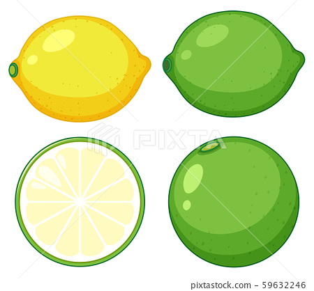 Simple citrus fruit on white backgrouns 59632246