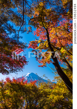 秋叶富士山Chureito塔 59632494