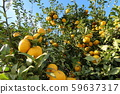 很多水果 59637317