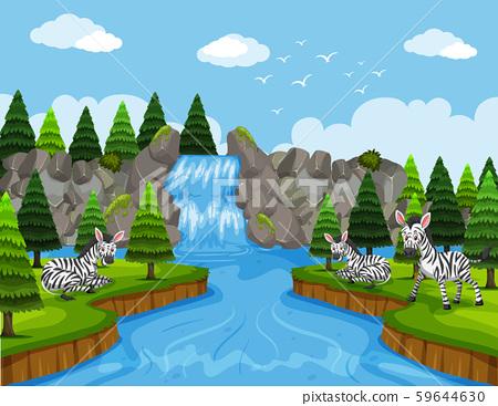 Zebras in wood scene 59644630