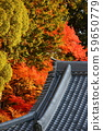 Autumn leaves in Kyoto 59650779