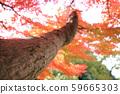 가을 단풍 낙엽 59665303