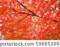 가을 단풍 낙엽 59665306