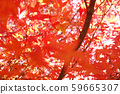가을 단풍 낙엽 59665307