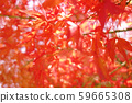 가을 단풍 낙엽 59665308