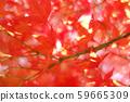 가을 단풍 낙엽 59665309