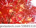 가을 단풍 낙엽 59665310