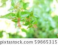 녹색 식물 나무 59665315