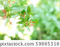 녹색 식물 나무 59665316