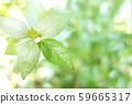 녹색 식물 나무 59665317