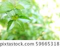 녹색 식물 나무 59665318