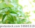 녹색 식물 나무 59665319