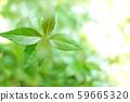 녹색 식물 나무 59665320