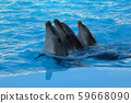 three dolphins are swimming 59668090