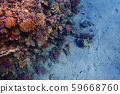 coral reef in Egypt 59668760