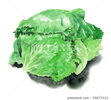 生菜與外部葉子畫水彩 59673322