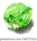 Lettuce painted in watercolor 59673323