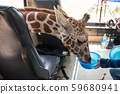 Feeding food to giraffe in bus 59680941
