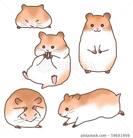 hamster 59681909