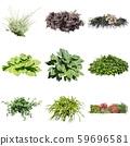 彩礁園林植物摳圖 59696581