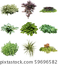 彩礁園林植物摳圖 59696582
