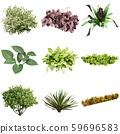 彩礁園林植物摳圖 59696583