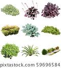 彩礁園林植物摳圖 59696584