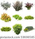 彩礁園林植物摳圖 59696585