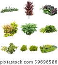 彩礁園林植物摳圖 59696586