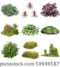 彩礁園林植物摳圖 59696587