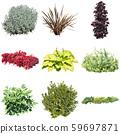 彩葉花園組種植 59697871