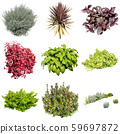 彩葉花園組種植 59697872