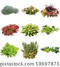彩葉花園組種植 59697873