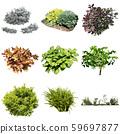 彩葉花園組種植 59697877