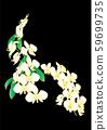 蝴蝶蘭 59699735