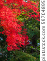 Maple of Mt.Takao in Tokyo 59704895