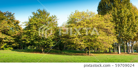 quiet place with grass and trees 59709024