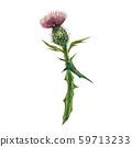 Thistle flower. Watercolor botanical illustration. Good for cosmetics, medicine, treating 59713233