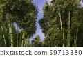Beautiful decarative bamboo forest 3d rendering 59713380