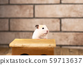 hamster with wooden house 59713637