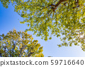 Blue sky and trees that began to fall 59716640