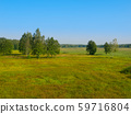 Siberian meadow with birches 59716804