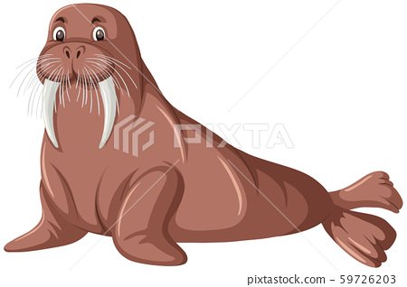 A walrus on white background 59726203