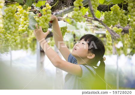 女孩採摘葡萄 59728020