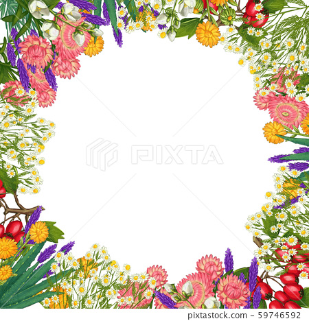 Hand drawn medicinal plant frame. Healing herbs border. isolated on white background 59746592