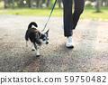 Woman exercise walking with Chihuahua dog in the park 59750482