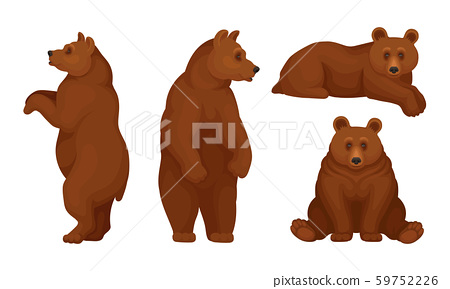 Brown Bears Sitting and Standing Vector Set 59752226